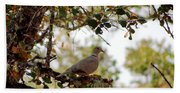 Dove In Autumn Oak Tree Lower Lake Ca Beach Towel