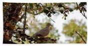 Dove In Autumn Oak Tree Lower Lake Ca Beach Sheet