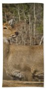 Down By The Duck Pond Beach Towel