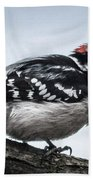 Downy Woodpecker 3 Beach Towel