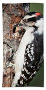 Downy Woodpecker Beach Towel
