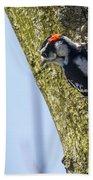 Downy Woodpecker - Male Beach Towel