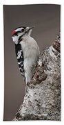 Downy Woodpecker Pictures 11 Beach Towel