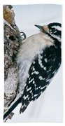 Downy Woodpecker Pictures 27 Beach Towel