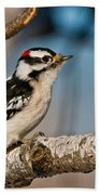 Downy Woodpecker Pictures 34 Beach Towel