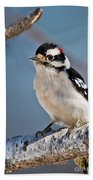 Downy Woodpecker Pictures 39 Beach Towel