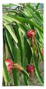 Dragon Fruit Tree Beach Towel