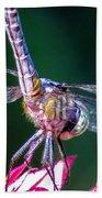 Dragonfly Close Up Beach Towel