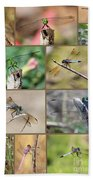 Dragonfly Collage 3 Beach Towel