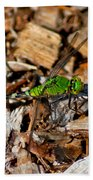 Dragonfly In Mulch Beach Towel