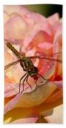 Dragonfly On A Rose Beach Towel
