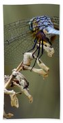 Dragonfly Wing Details Beach Towel