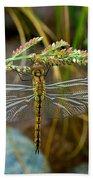 Dragonfly X-ray Beach Towel