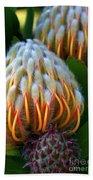 Dramatic Protea Flower Beach Towel