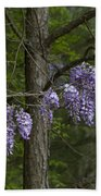 Draping Wisteria Frutescens Wildflower Vines Beach Towel
