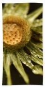Dried Dandelion After Rain Beach Towel by Iris Richardson