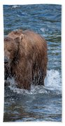 Dripping Grizzly Beach Towel