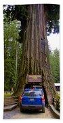 Drive Through Redwood Tree Beach Towel