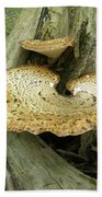 Dryads Saddle Bracket Fungi - Polyporus Squamosus Beach Towel