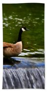 Duck On The River Wye Waterfall - In Bakewell Peak District - England Beach Towel