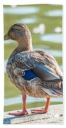 Duckling By The Lake  Beach Towel