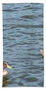 Ducks On Spaulding Pond Beach Towel