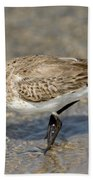 Dunlin Calidris Alpina In Winter Plumage Beach Towel
