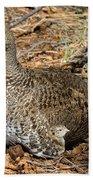 Dusky Grouse With Chicks Beach Towel