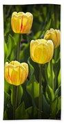 Dutch Yellow Tulip Flowers On Windmill Island In Holland Michigan Beach Towel