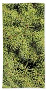 Dwarf Evergreen Beach Towel