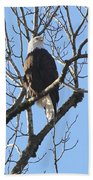 Bald Eagle Sunny Perch Beach Towel