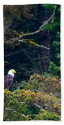 Eagle In Trees  Beach Towel