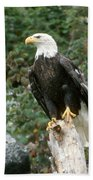 Eagle Perched Atop Stump Beach Towel