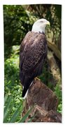 Eagle Portrait Beach Towel