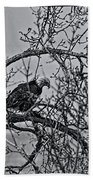 Eagles Along The Mississippi 2 Beach Towel