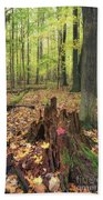 Early Autumn Woods Beach Towel