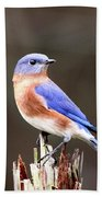 Eastern Bluebird - The Old Fence Post Beach Towel