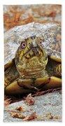 Eastern Box Turtle Beach Towel