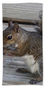 Eastern Gray Squirrel-4 Beach Towel