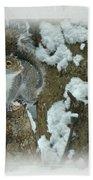 Eastern Gray Squirrel - Sciurus Carolinensis Beach Towel