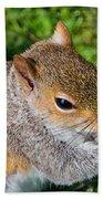 Eastern Grey Squirrel Beach Towel