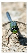 Eastern Pondhawk Front Beach Towel