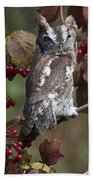 Eastern Screech Owl Red And Gray Phases Beach Towel