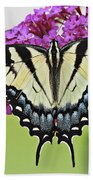 Eastern Swallowtail  Beach Towel