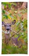 Eastern Whitetail Deer Beach Sheet