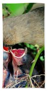 Eat Up Beach Towel by Frozen in Time Fine Art Photography