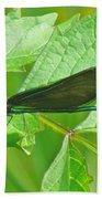 Ebony Jewelwing Damselfly - Calopteryx Maculata Beach Towel