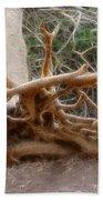 Eccentric Tree Root Growing In Ein Gedi Beach Towel