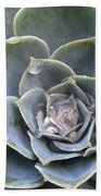 Echeveria With Water Drops Beach Towel