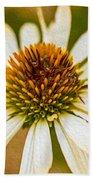 Echinacea Fading Beauty Beach Towel by Omaste Witkowski